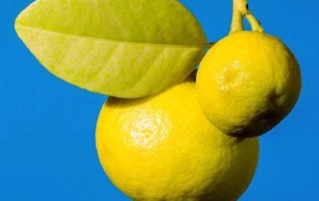 Le Bleu Citron