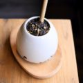 Quies tea Amsterdam theebar
