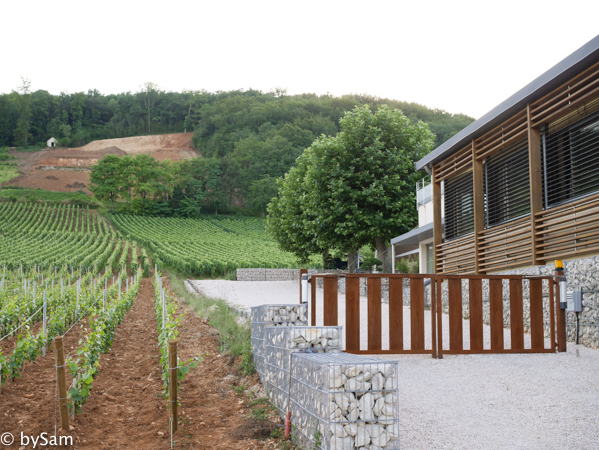 Le Charlemagne vineyards